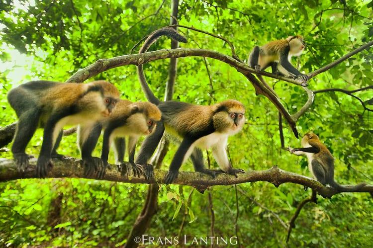Boaben-Monkey-Sanct
