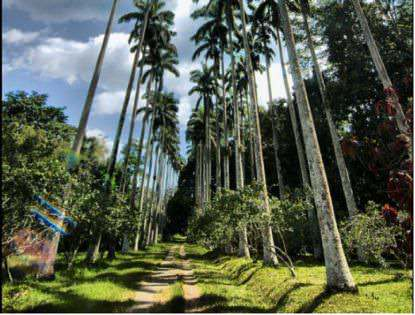 Bunso-Arboretum