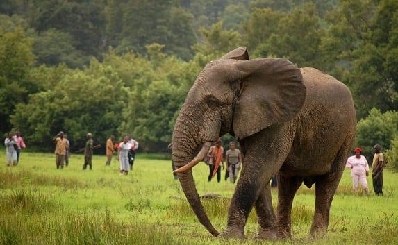 Mole National Park - Visit Ghana