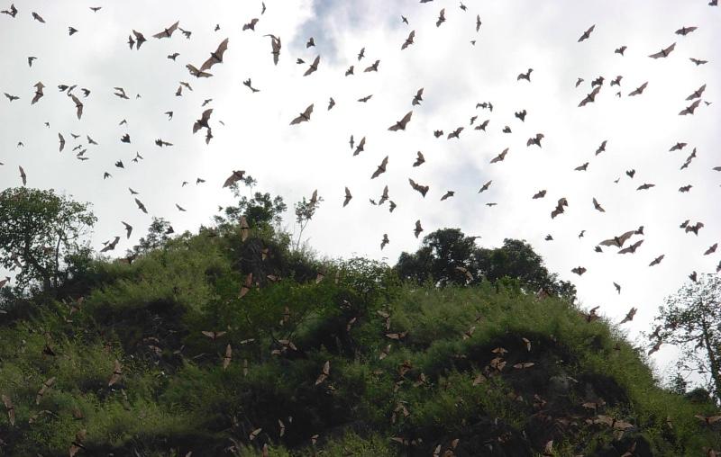 Wli-Waterfall-Bats