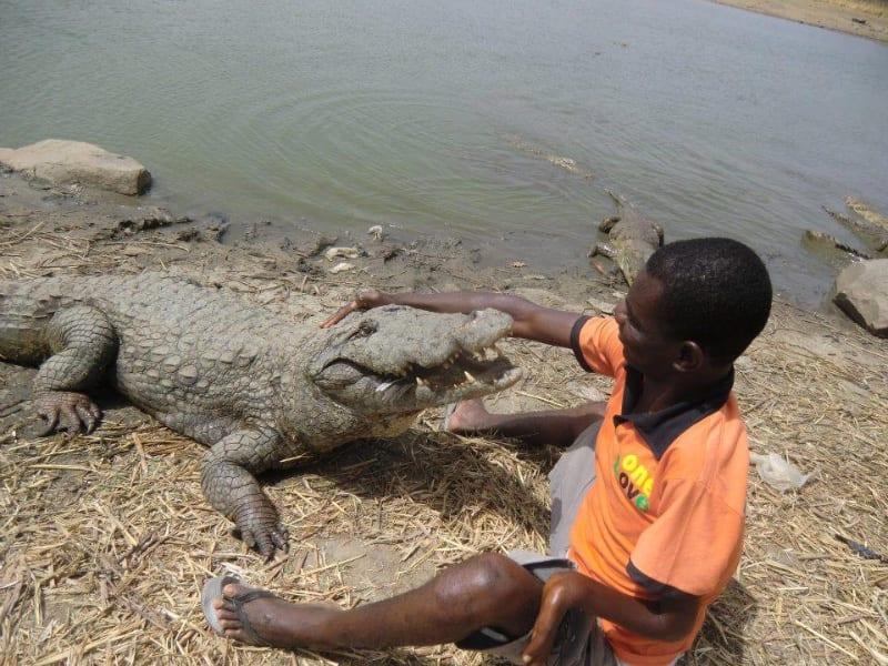 Paga-Crocodile